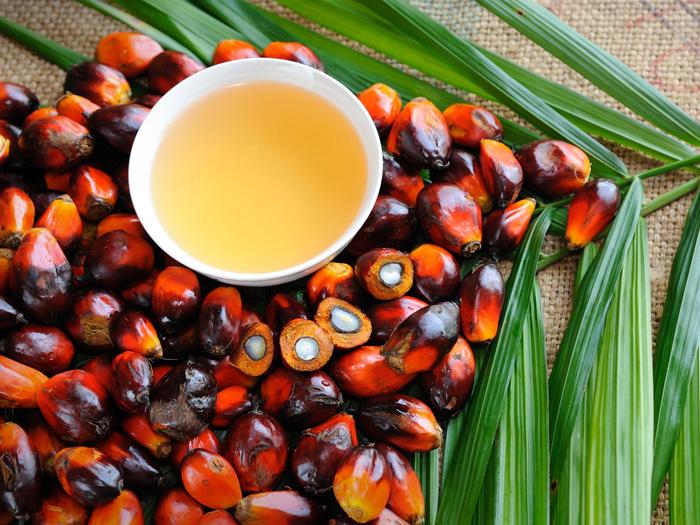 К чему приведёт подорожание пальмового масла?
